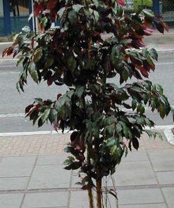 Plante i plast ca. 150 cm høy